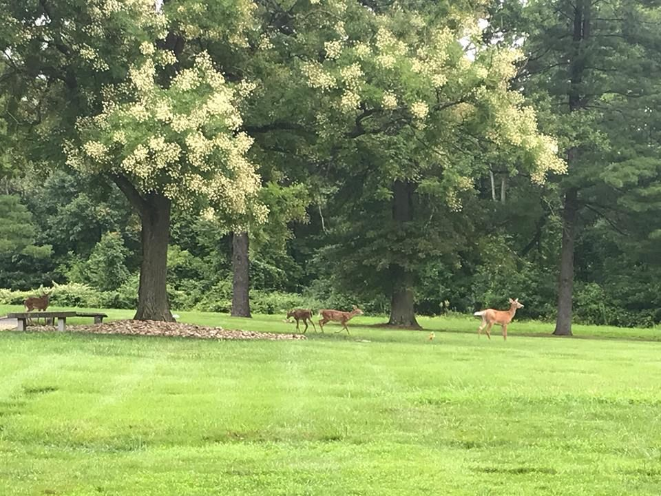deer on grounds